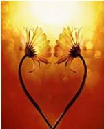 image fleur coeur